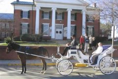 traditional carriage in front of the Courthouse
